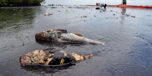 Niger-Delta-Oil-Spill-2